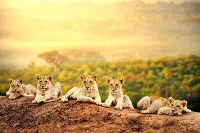 Poster Löwenbabys warten zusammen.