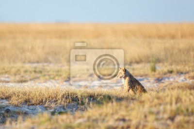Löwenjungen in bushveld