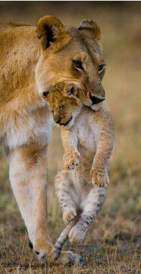 Löwin ist in den Zähnen seines cub
