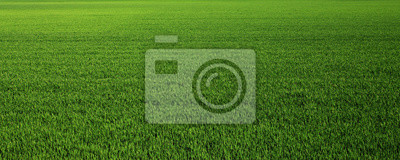 Poster Lush green grass meadow background