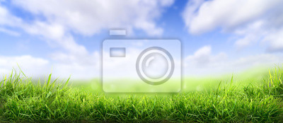 Poster Lush spring green grass background with a sunny summer blue sky over fields and pastures.