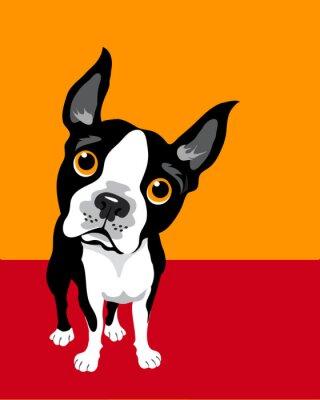 Poster lustige Illustration Boston Terrier