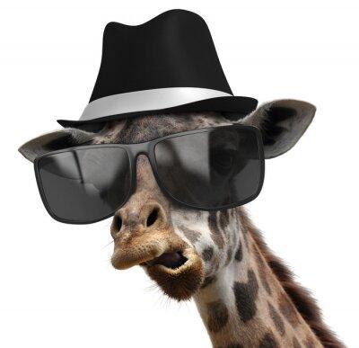 Poster Lustige Tierporträt einer Giraffe mit Schattierungen und Fedora