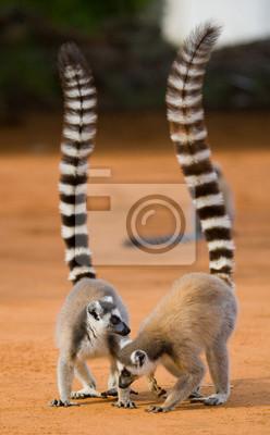 Madagaskar. Eine ausgezeichnete Illustration.