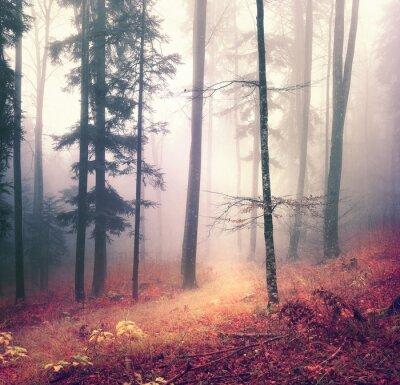 Poster Magische Herbstsaison Farben Wald Baum Hintergrund mit hellen orange rot Pfad. Schöne saisonale Wald.