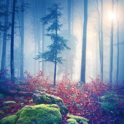 Poster Magisches Licht in nebligen Wald mit Sonne