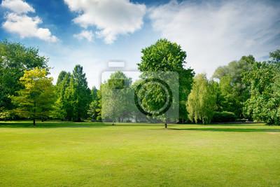 Poster Malerische grüne Lichtung im Stadtpark. Grünes Gras und Bäume.