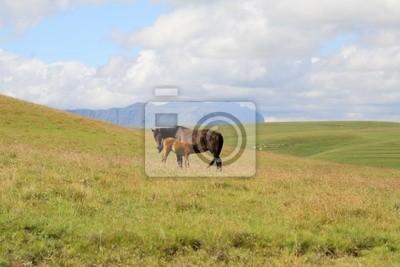Maluti Pferde