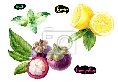 Poster Mangostan-Zitronen-Minz-Aquarell