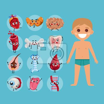 Männliche körper anatomie medizinische plakat mit kind. niere ...