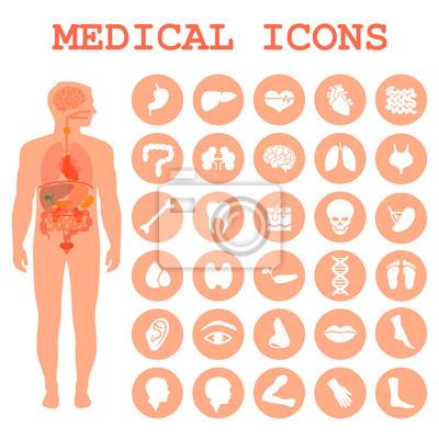 Medizinische infografik icons, menschliche organe, körper anatomie ...