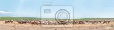 Mehr als 200 Elefanten warten, um zu trinken