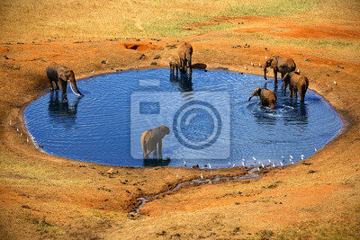 Mehrere Elefanten an der Quelle