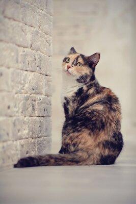 Poster Mehrfarbige Katze in der Nähe einer Backstein leichte Wand