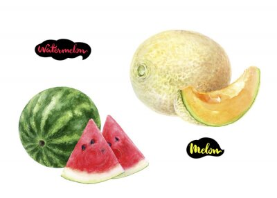 Poster melon watermelon watercolor hand drawn illustration set