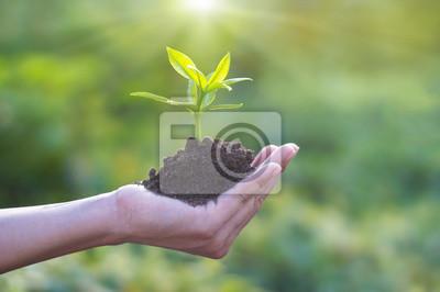 Poster Menschliche Hand hält junge Pflanze mit Boden auf Natur Hintergrund, Umwelt-Konzept