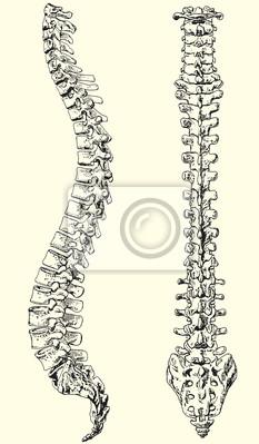 menschlichen Wirbelsäule Vektor-Illustration schwarz und weiß