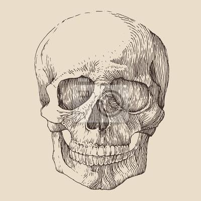 menschlicher Schädel, vintage illustration, graviert Retro-Stil