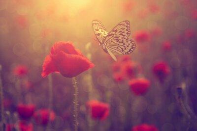 Poster Mohn und Schmetterling