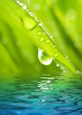 Poster Morgentau auf einem grünen Gras spiegelt sich in gerenderten Wasser