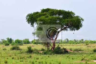 Murchison Falls Nationalpark, Uganda