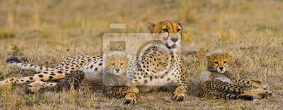 Mutter Geparde und ihre Jungen in der Savanne. Kenia. Tansania. Afrika. Nationalpark. Serengeti Maasai Mara. Eine ausgezeichnete Illustration.