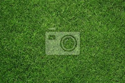 Poster Nahaufnahme des grünen Gras Textur, Hintergrund mit Kopie Raum