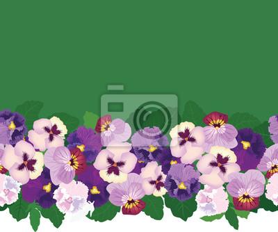 nahtlose Muster Grenze von gelb und lila Stiefmütterchen, Hintergrund