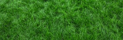 Poster Natural green grass background, fresh lawn top view