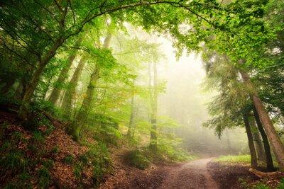 Poster Natürlicher Torbogen aus Bäumen