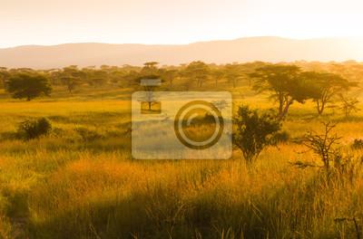 Nebelhafter Sonnenaufgang über der afrikanischen Savanne