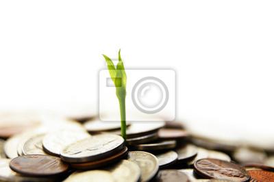 neue grüne Pflanze schießen aus Geld wachsen
