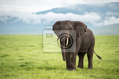 Poster Ngorongoro Elefanten - Tansania