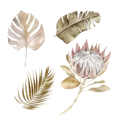Poster Old dry swirling tropical leaves and flower watercolor vector illustration isolated on the white background. Closeup view palm leaf in boho style. Hand drawn leaves and protea in sepia color scheme.