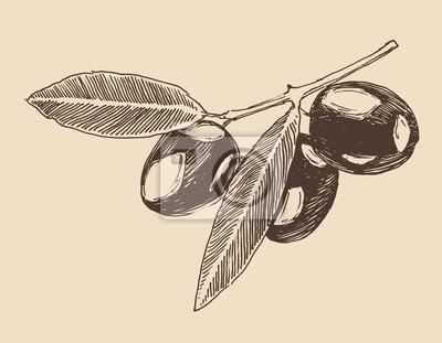 Olivenzweig Vintage Illustration, graviert Retro-Stil,