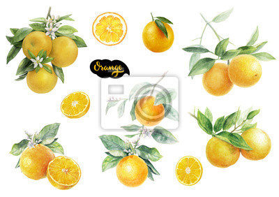 Poster Orange fruits watercolor set hand draw illustration.