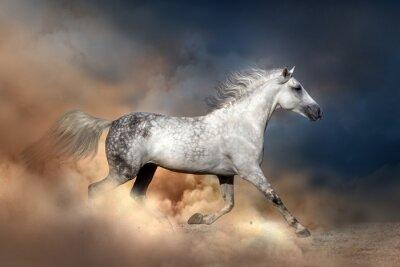 Poster Orlov Pferd in Staub laufen