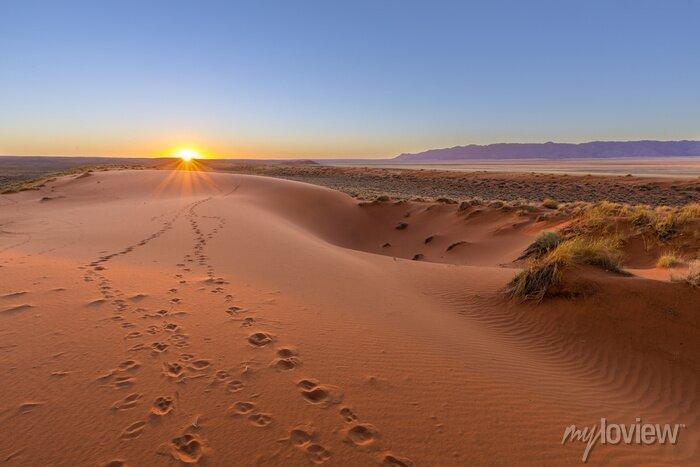 Poster Oryx-Tracks bis Sonnenuntergang