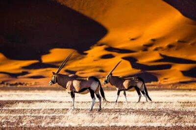 Poster Oryx und Dünen - Sossusvlei - Namibia