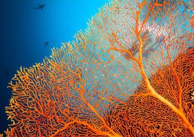 Poster Paar Taucher auf Korallenriff