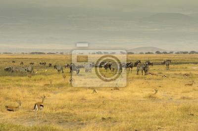 Paesaggio della savana africana