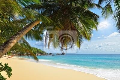 Palm über tropischen Strand
