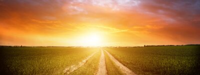 Poster Panorama of green field with dirt road and sunset sky. Summer rural landscape sunrise