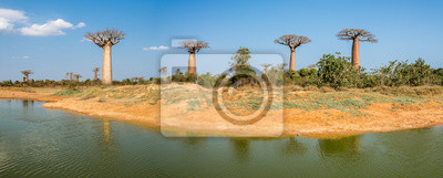 Panorama view at the Baobabs trees near Morondava