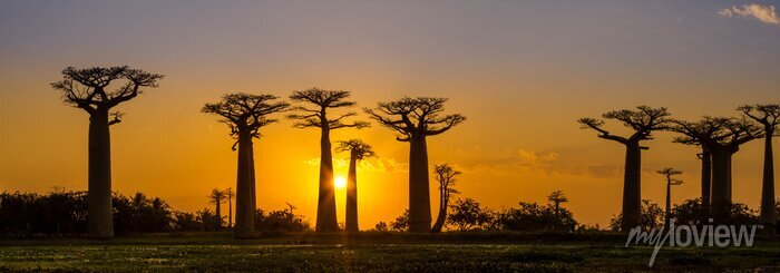 Poster Panoramablick bei Sonnenuntergang über Baobab Allee