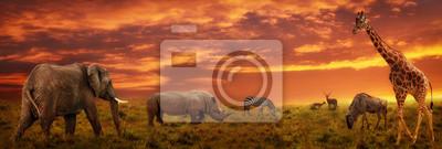 Poster Panoramischer Hintergrund des afrikanischen Sonnenuntergangs mit Schattenbild von Tieren