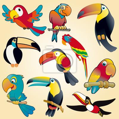 Papageien und Tukane Vektor-Sammlung