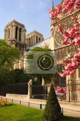 Paris, Notre Dame Kathedrale mit blühenden Baum