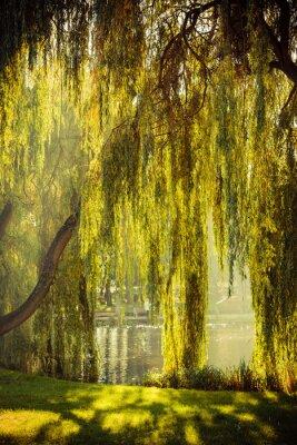 Poster Park mit Teich und Weiden