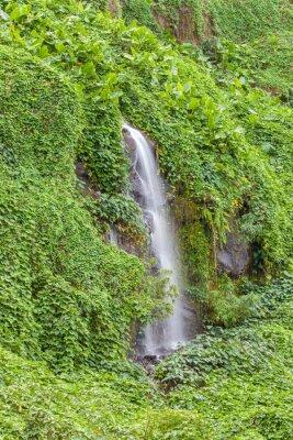 Poster Paroi humide und verdoyante, Anse des Cascades, île de la Réunion